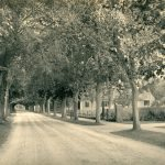 Main Street in Centerville. The photo looks north on Main Street and is taken circa 1900. Note the canopy of trees covering the street—a stark contrast to the previous images. Courtesy of the Centerville Historical Museum